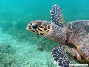plongee-sous-marine-nosy-mada216